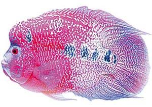 ฮวงจุ้ย : เลี้ยงปลามงคลเสริมโชคลาภ
